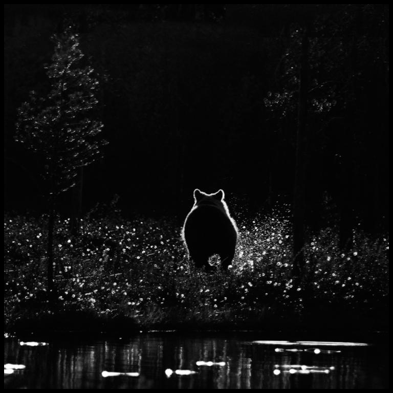 Autor: Jørgen Skaug, Norway