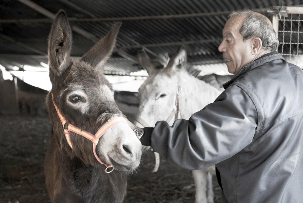 Donkey man (photo: Aase-Marie Dahle)