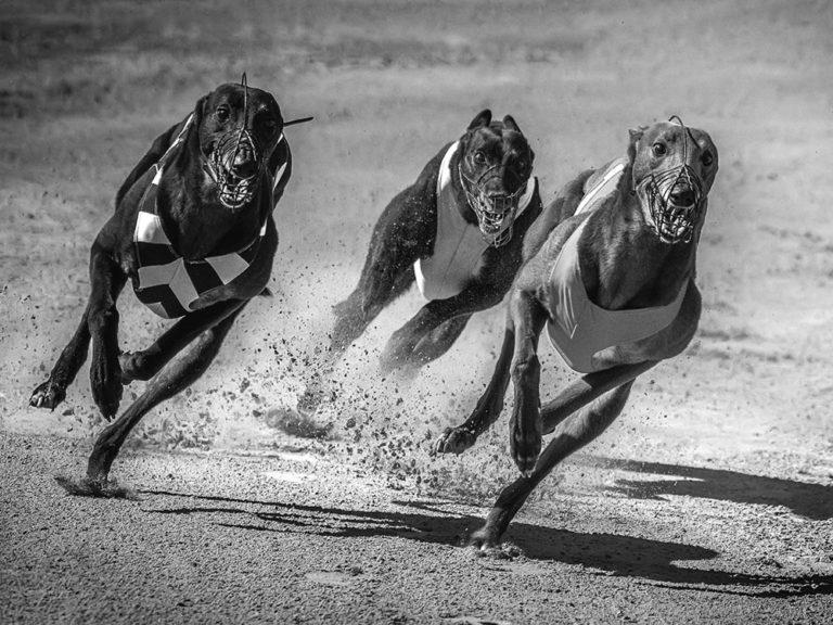 DK-Honoured-Peter-Helmut-Larsen-Leading dogs