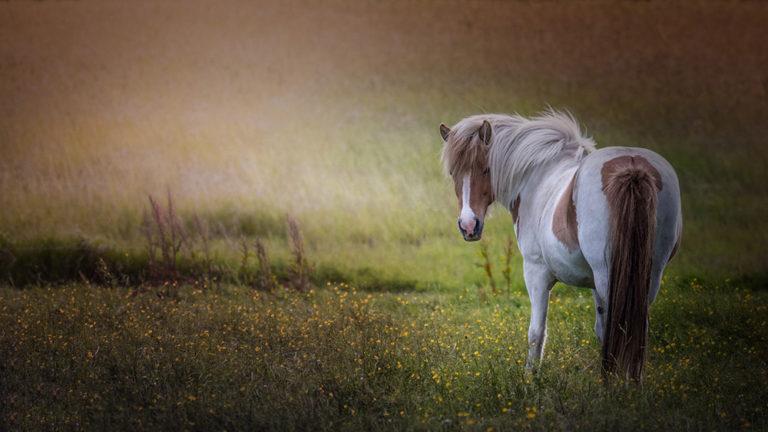 DK-Honoured-Peter-Helmut-Larsen-The Horse