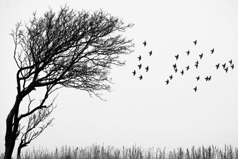 DK-Honoured-Peter-Helmut-Larsen-The tree