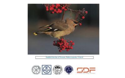NFM 2020 — Katalogen er her!