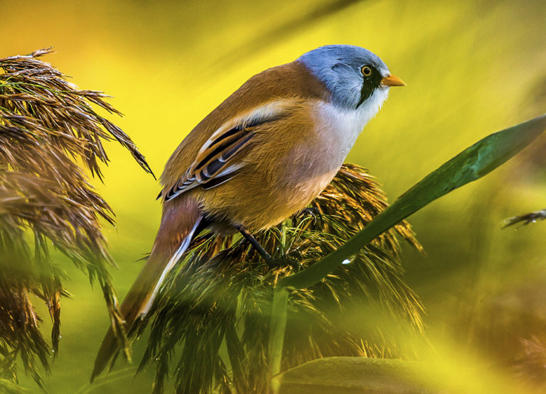 2016, NFD-Fugletur