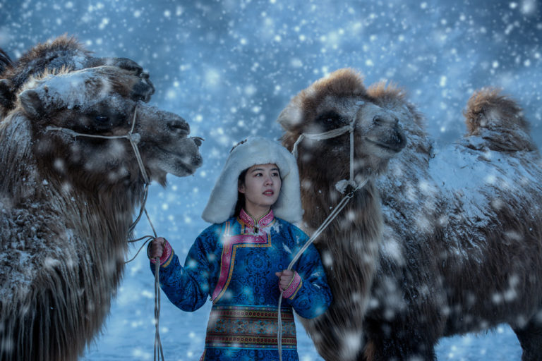 Camels and girl 008