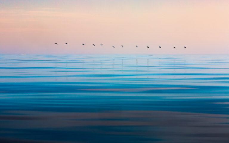 Birds on Arctic ocean