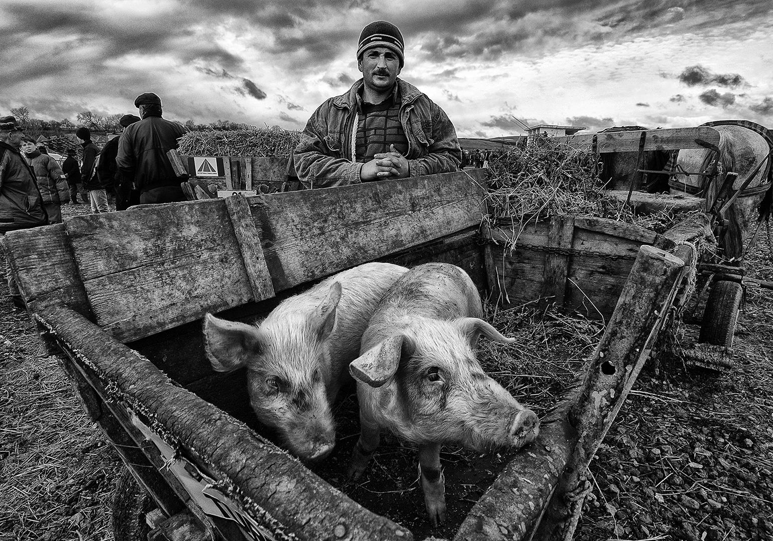 Pig trader, Søren Skov
