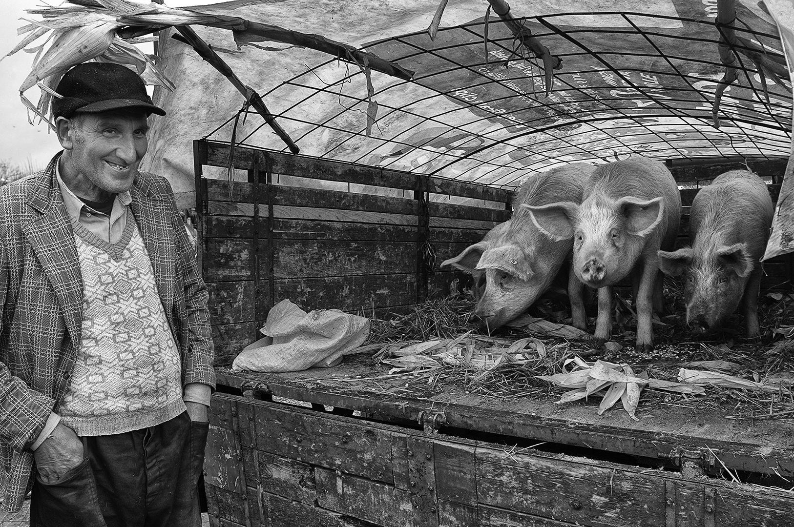 Pigs market, Søren Skov