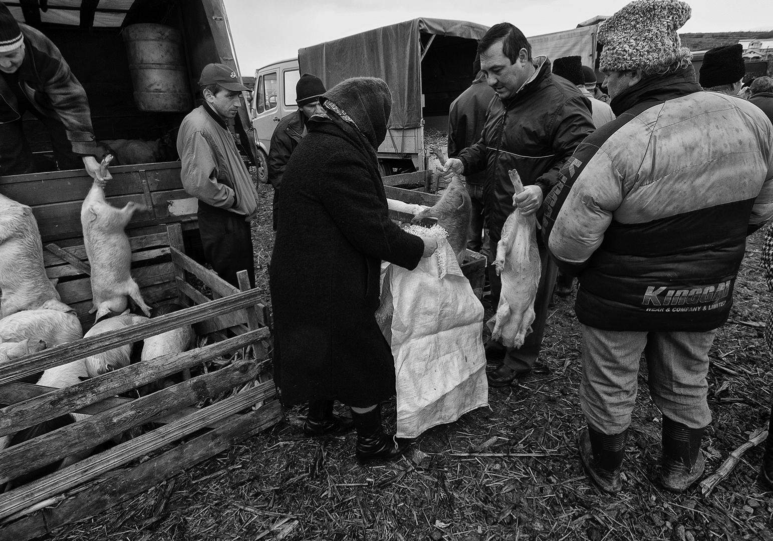 Pig trade, Søren Skov