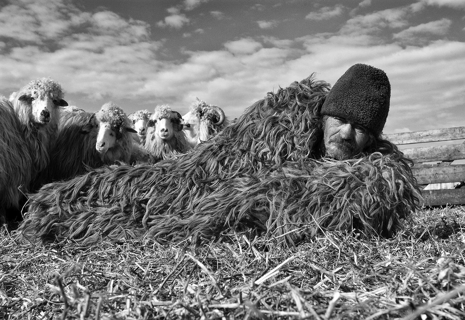 Sheep and shepherd, Søren Skov