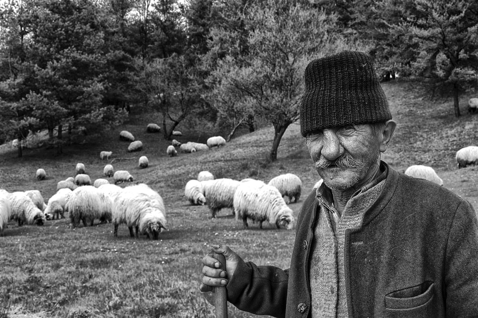 Shepherd Făgăraș, Søren Skov