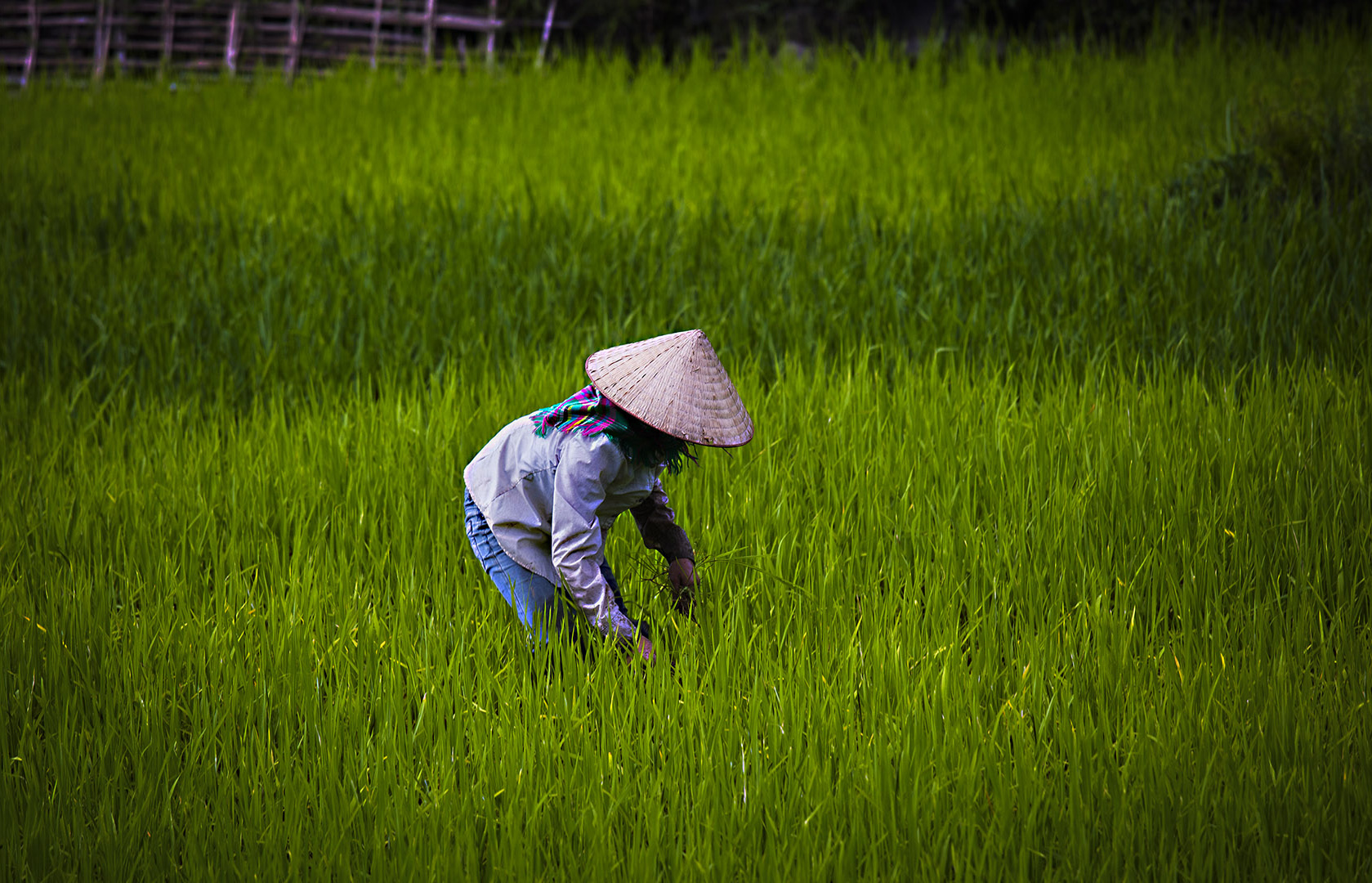 Tema Vietnam 3, Clas Gustafsson