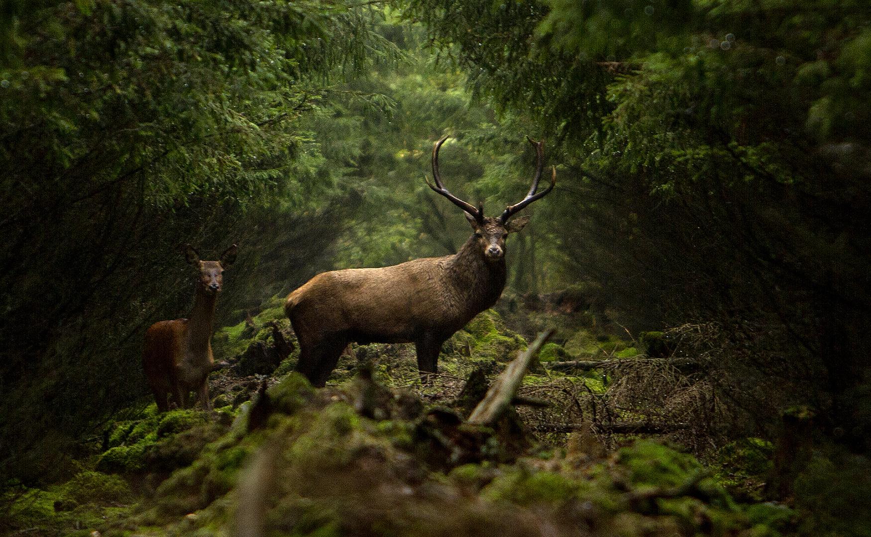 Deer 5, Jørgen Kristensen